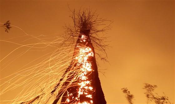 Cháy rừng Amazon báo động đến mức không thể kiểm soát - ảnh 1