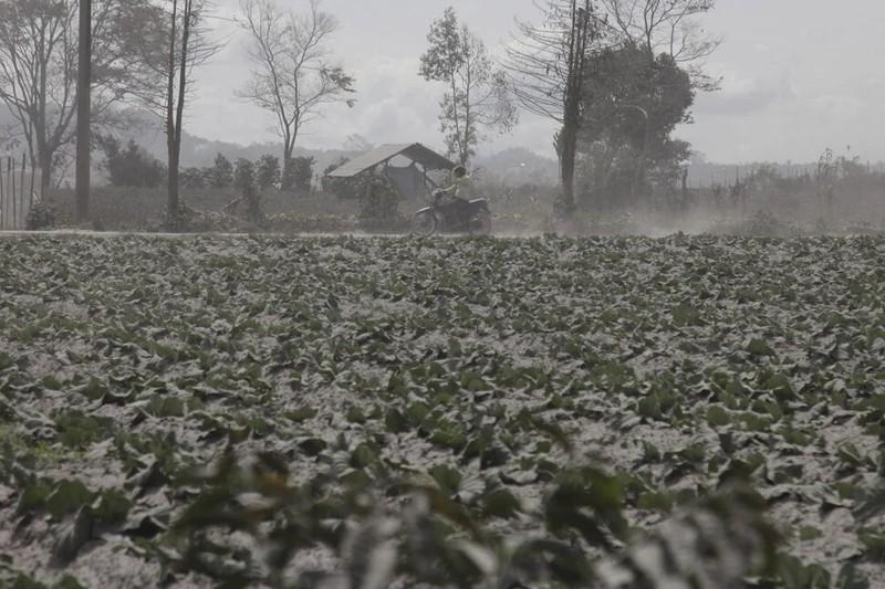 Ảnh: Núi lửa Sinabung phun ra đám mây tro bụi cao 5.000 m - ảnh 7