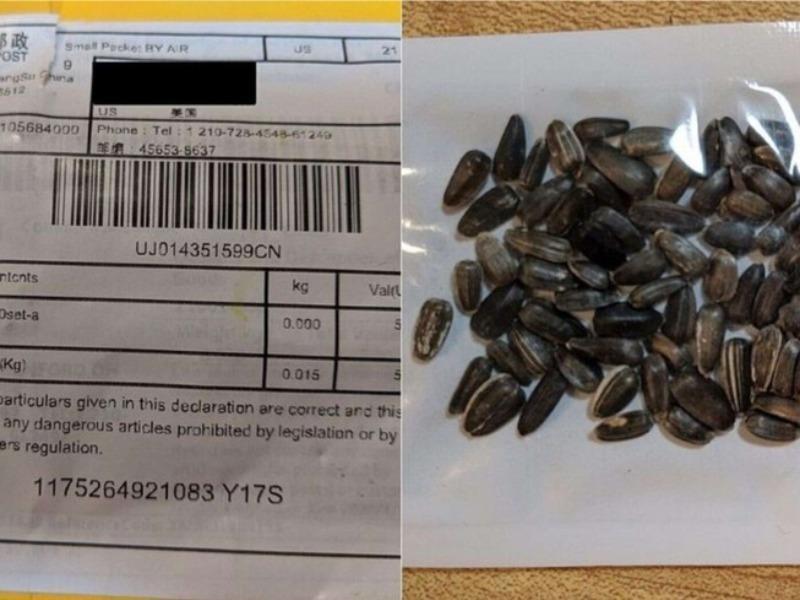Hạt giống gửi từ Trung Quốc chứa cỏ dại độc hại và ấu trùng bọ - ảnh 1