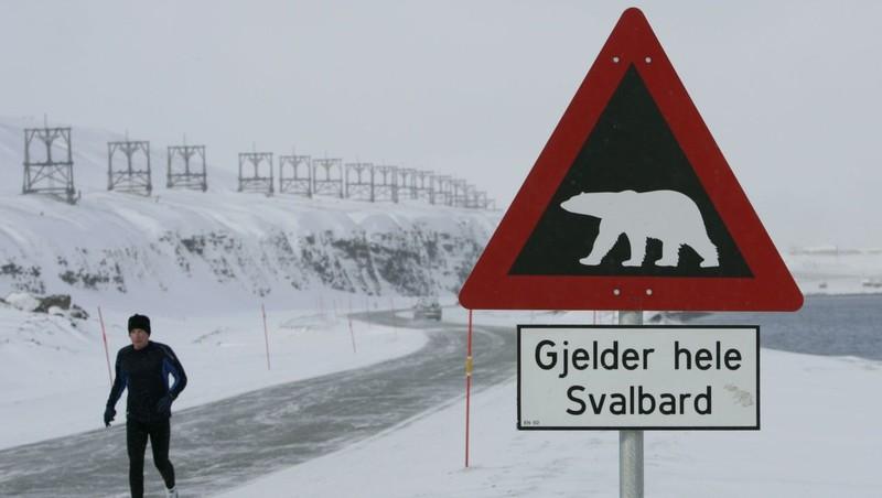 Tử vong khi đi cắm trại vì bị gấu Bắc Cực tấn công - ảnh 1