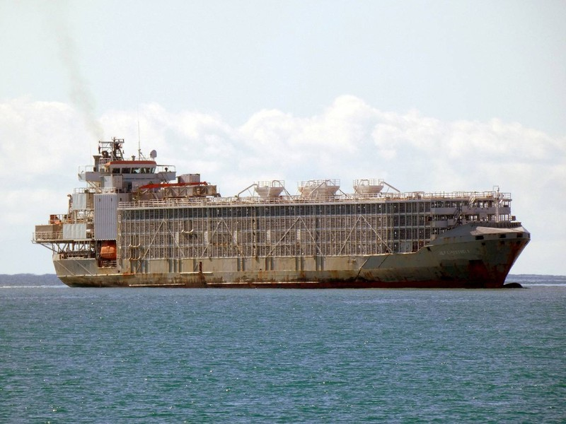 Tàu chở 5.800 con bò chìm ở biển Hoa Đông, 42 người mất tích - ảnh 2