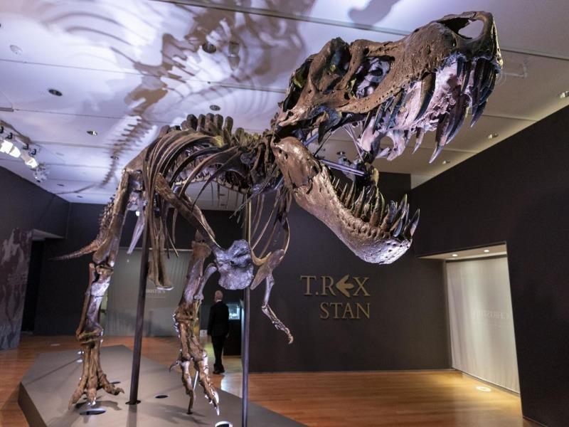 Sắp đấu giá hóa thạch T-Rex hoàn chỉnh nhất thế giới  - ảnh 1