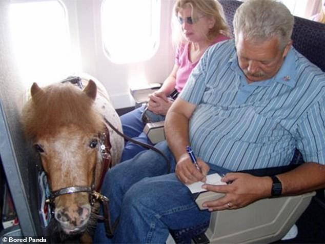 'Động vật phục vụ' nào được bay trên các chuyến bay Mỹ? - ảnh 3