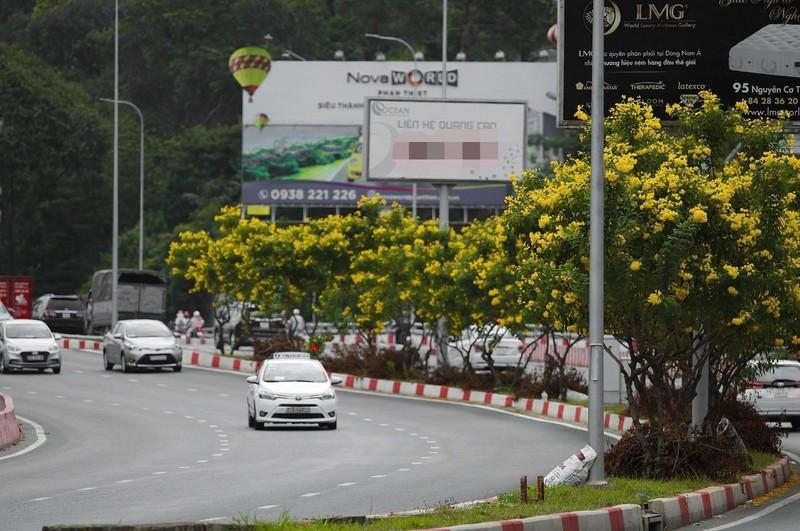 Bộ ảnh: Huỳnh liên nở rợp trên đường phố Sài Gòn - ảnh 1