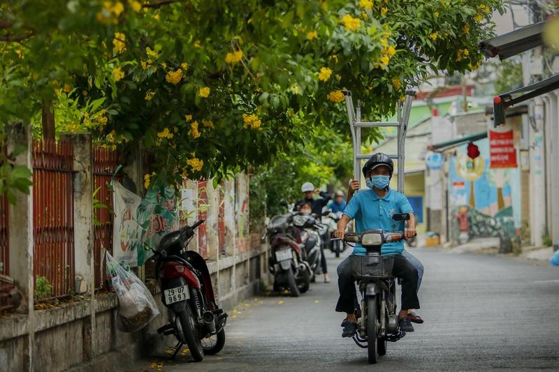 Bộ ảnh: Huỳnh liên nở rợp trên đường phố Sài Gòn - ảnh 6