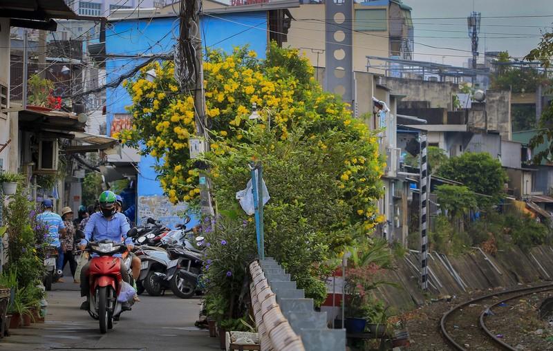 Bộ ảnh: Huỳnh liên nở rợp trên đường phố Sài Gòn - ảnh 7