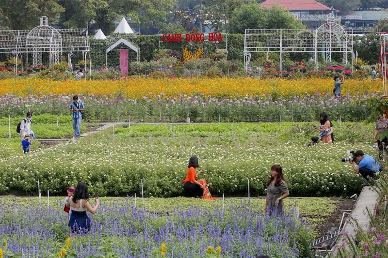 Đẹp ngỡ ngàng Cánh đồng hoa bên sông Sài Gòn - ảnh 4