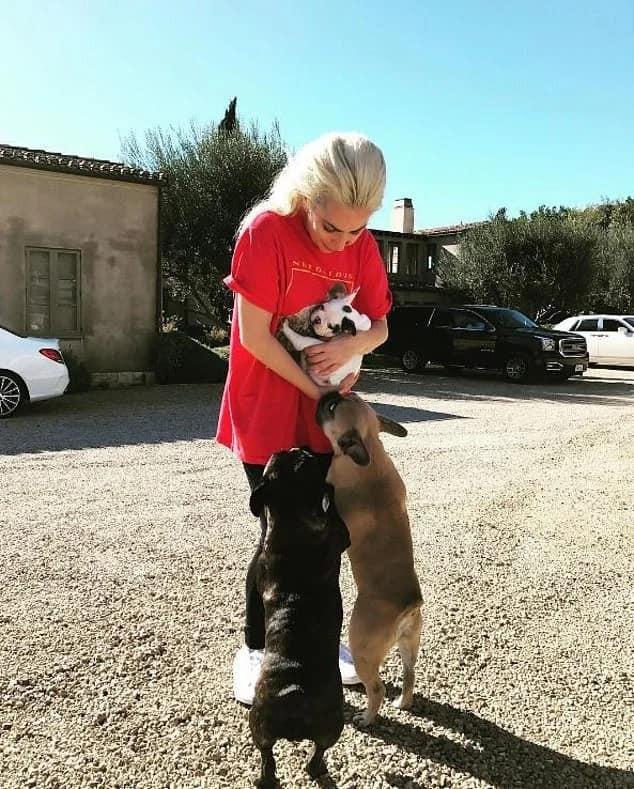 Ca sĩ Lady Gaga treo thưởng nửa triệu đô tìm 2 chú chó cưng - ảnh 1