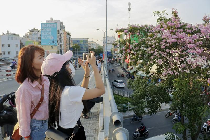 Sài Gòn - mùa kèn hồng lại đến - ảnh 4