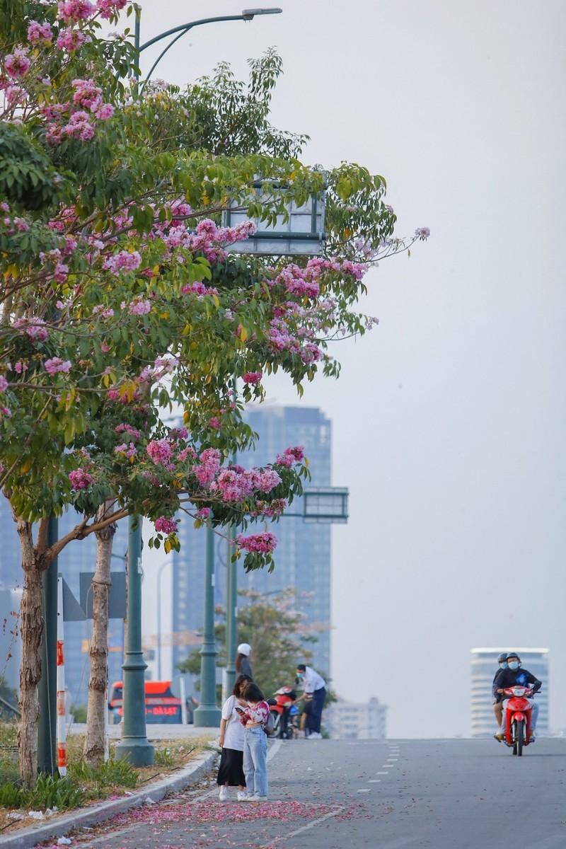 Sài Gòn - mùa kèn hồng lại đến - ảnh 8