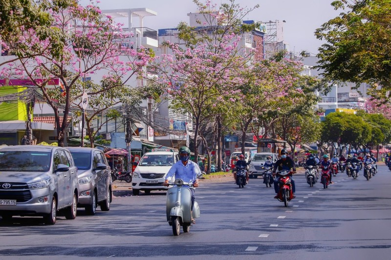 Sài Gòn - mùa kèn hồng lại đến - ảnh 3