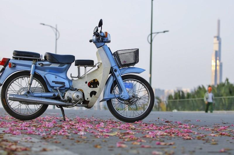 Sài Gòn - mùa kèn hồng lại đến - ảnh 5