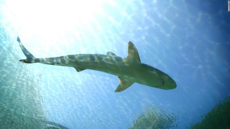 Úc: Bị cá mập tấn công, một vận động viên lướt sóng thiệt mạng - ảnh 1