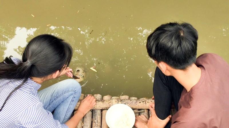 Độc đáo đàn cá 'chảnh', ăn phải đút bằng muỗng - ảnh 6
