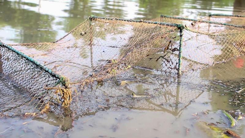 Mùa đặt lú bắt cá đồng ở miền Tây - ảnh 1