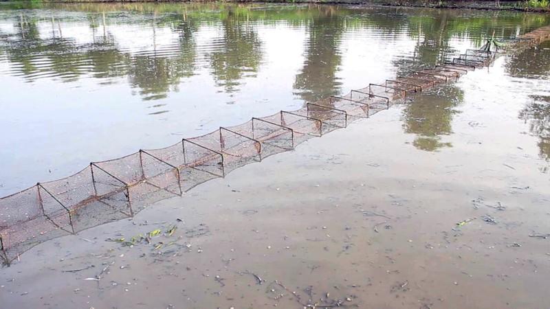 Mùa đặt lú bắt cá đồng ở miền Tây - ảnh 2