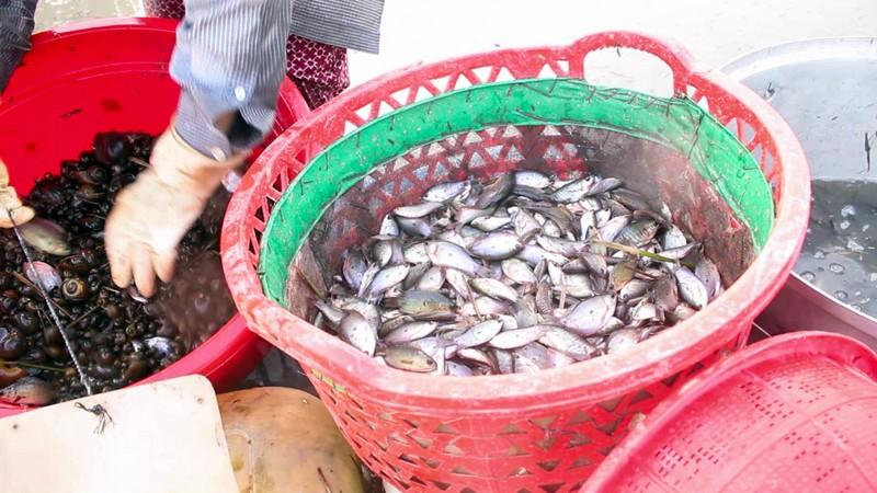 Mùa đặt lú bắt cá đồng ở miền Tây - ảnh 6