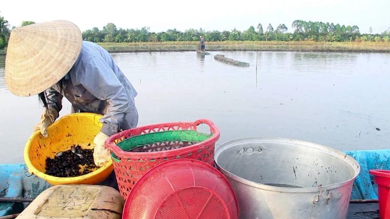 Mùa đặt lú bắt cá đồng ở miền Tây - ảnh 7