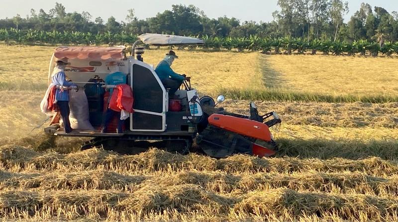Hậu Giang: Lúa trúng mùa được giá, nông dân vui  - ảnh 1