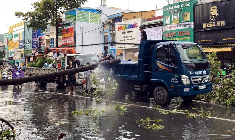 Cần Thơ: Giông lốc làm cây xanh ngã đổ, 9 ô tô hư hỏng nặng - ảnh 1