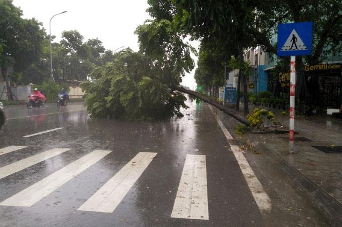 Cây xanh nhiều tuyến phố Hà Nội gục đổ sau bão số 3 - ảnh 3