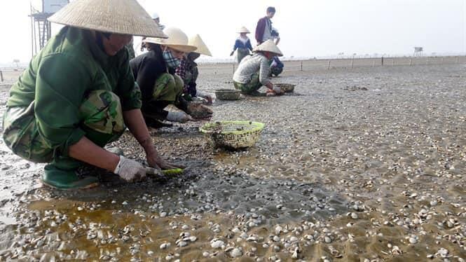Sau bão số 3, ngao chết nổi trắng biển Thái Bình - ảnh 1