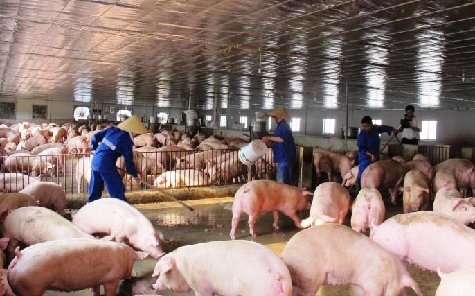 Việt Nam xuất gần 70 tấn thịt heo đông lạnh sang Hong Kong - ảnh 1