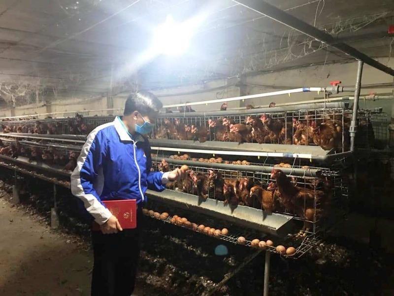 Tình hình bi đát, người chăn nuôi phải hủy trứng gà giống - ảnh 1