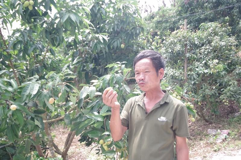 'Tôi rất muốn người Nhật được ăn quả vải đặc sản Bắc Giang' - ảnh 2