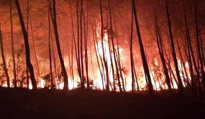 Báo cáo Thủ tướng về cháy rừng liên tiếp tại Nghệ An, Hà Tĩnh - ảnh 1