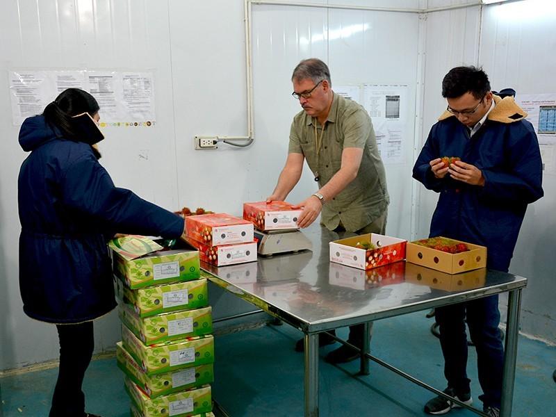 Đồng ý cho nhân viên Mỹ sang VN 'giải cứu' ách tắc trái cây - ảnh 1