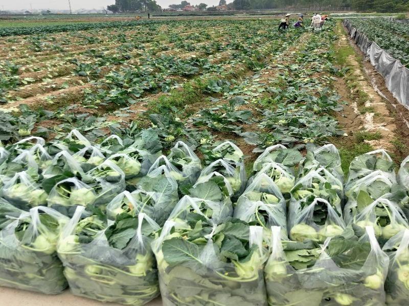 Bắc Ninh không cấm xe chở nông sản từ Hải Dương  - ảnh 1