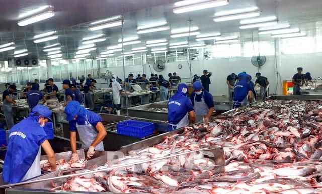 Gần một nửa nhà máy chế biến cá tra ở ĐBSCL dừng hoạt động - ảnh 2
