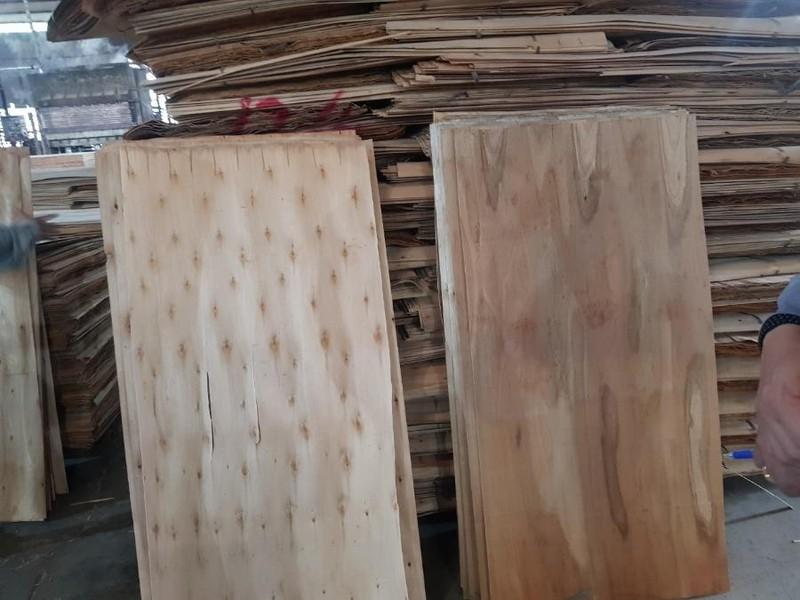 Việt Nam và Mỹ đạt thỏa thuận về cuộc điều tra liên quan đến gỗ  - ảnh 1