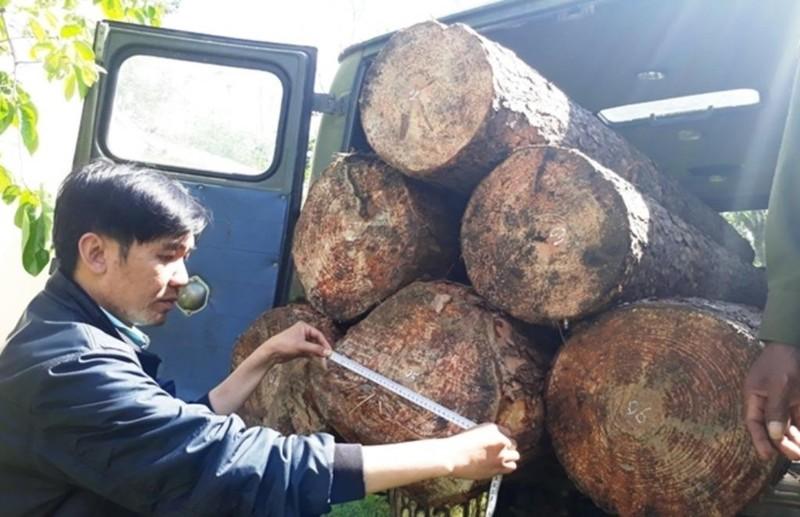 Dùng xe u oát vào rừng chở gỗ lậu - ảnh 3