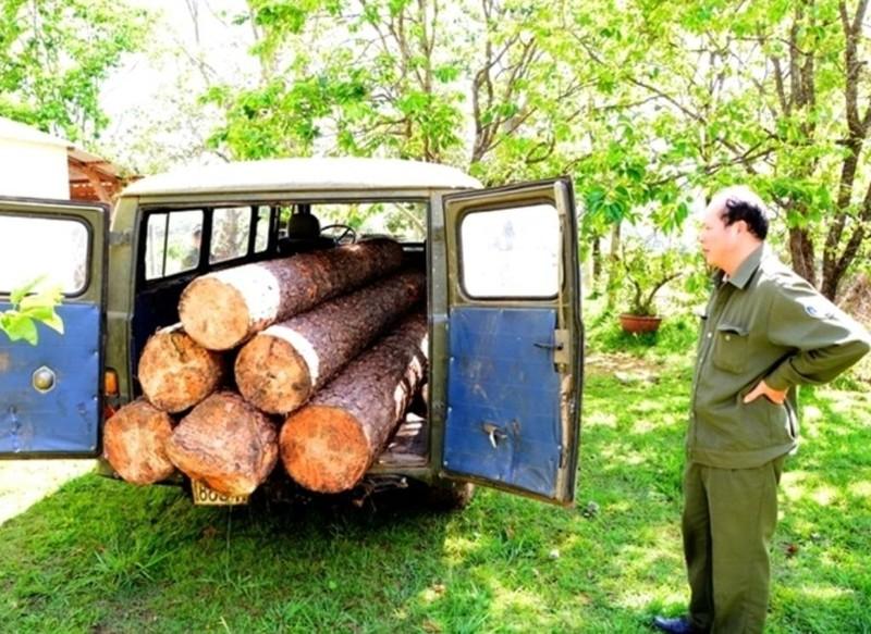 Dùng xe u oát vào rừng chở gỗ lậu - ảnh 2