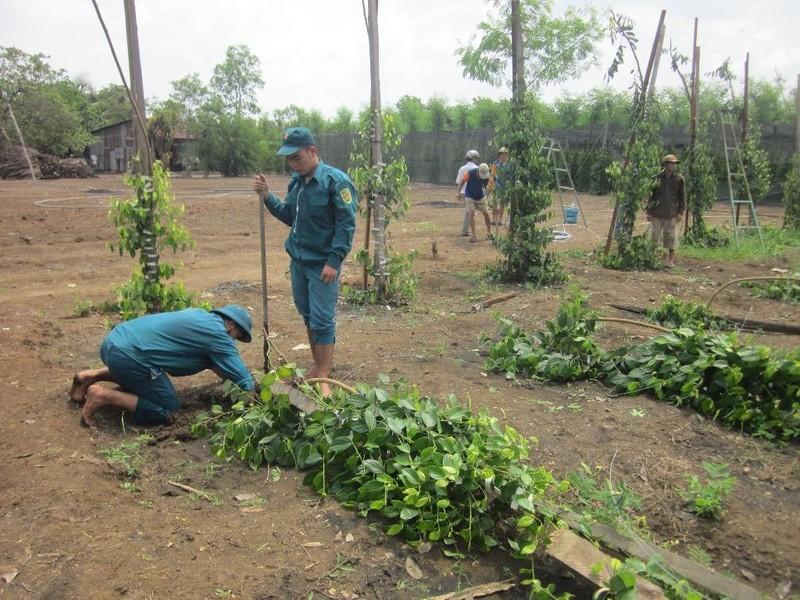 Bình Phước: Giúp dân sửa 30 căn nhà bị tốc mái vì lốc - ảnh 2