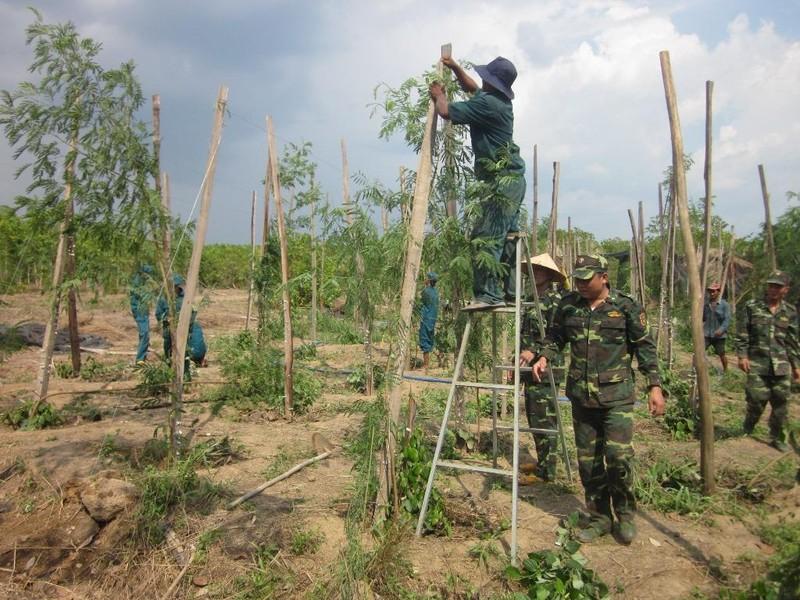 Bình Phước: Giúp dân sửa 30 căn nhà bị tốc mái vì lốc - ảnh 1