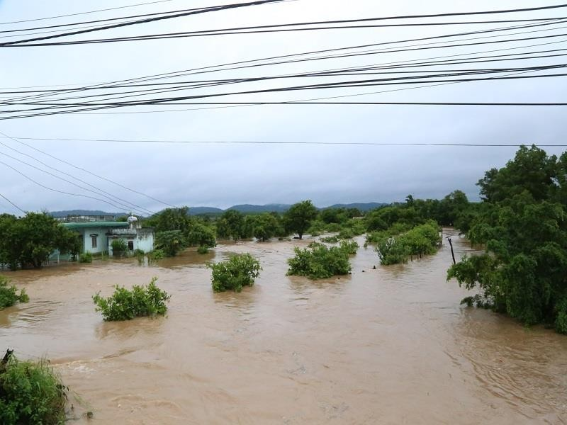 Đắk Lắk, Lâm Đồng: Hoa màu chìm trong biển nước - ảnh 2