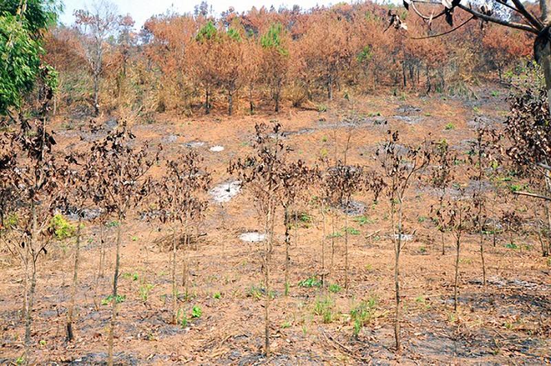 Bị kiểm điểm vì cháy 17 ha rừng nhưng 10 ngày mới báo cáo - ảnh 1