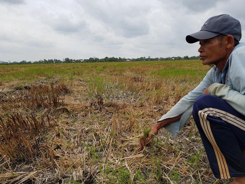 TP.HCM hỗ trợ 5 tỉnh miền Tây bị hạn hán, xâm nhập mặn  - ảnh 1