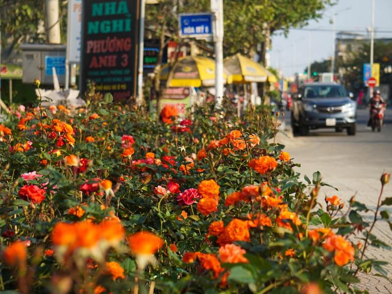 Phố phường Đà Nẵng rực rỡ trước Tết Tân Sửu - ảnh 8
