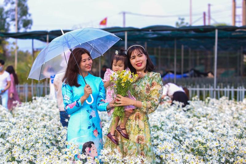 Vườn cúc họa mi 10.000 cây hút hồn giới trẻ Đà Nẵng - ảnh 5