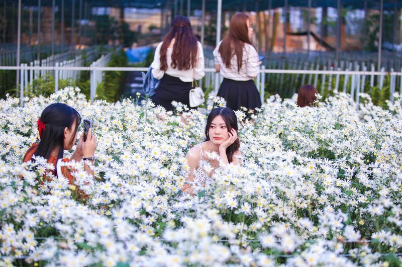 Vườn cúc họa mi 10.000 cây hút hồn giới trẻ Đà Nẵng - ảnh 2