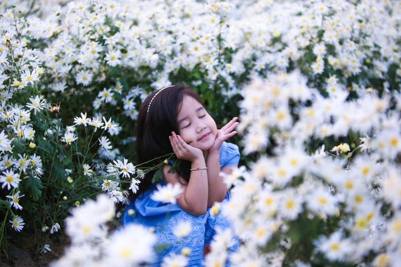 Vườn cúc họa mi 10.000 cây hút hồn giới trẻ Đà Nẵng - ảnh 3