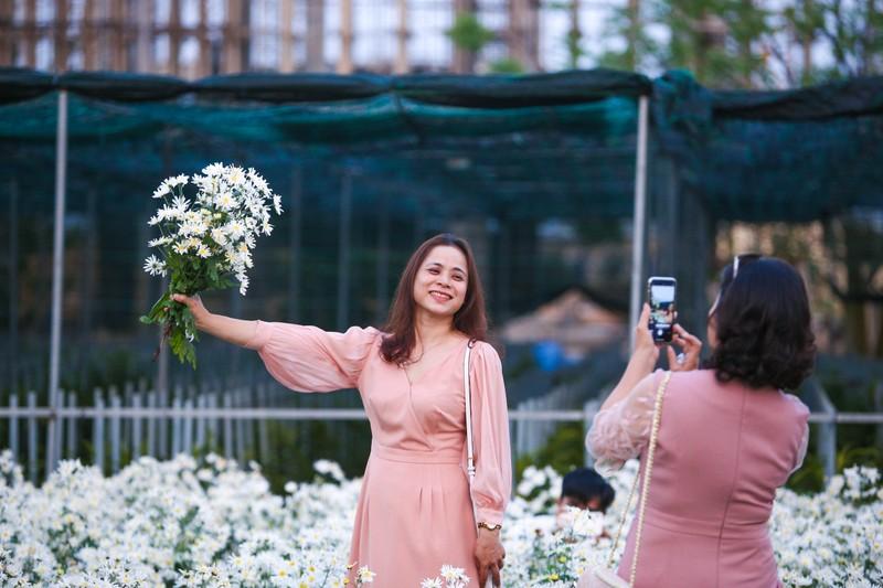 Vườn cúc họa mi 10.000 cây hút hồn giới trẻ Đà Nẵng - ảnh 4