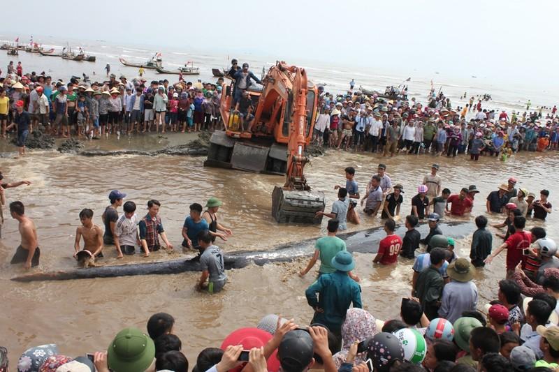 Chùm ảnh: 7 giờ miệt mài giải cứu cá voi 15 tấn  - ảnh 12