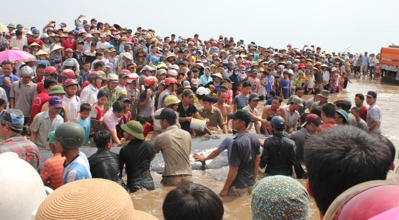 Chùm ảnh: 7 giờ miệt mài giải cứu cá voi 15 tấn  - ảnh 14