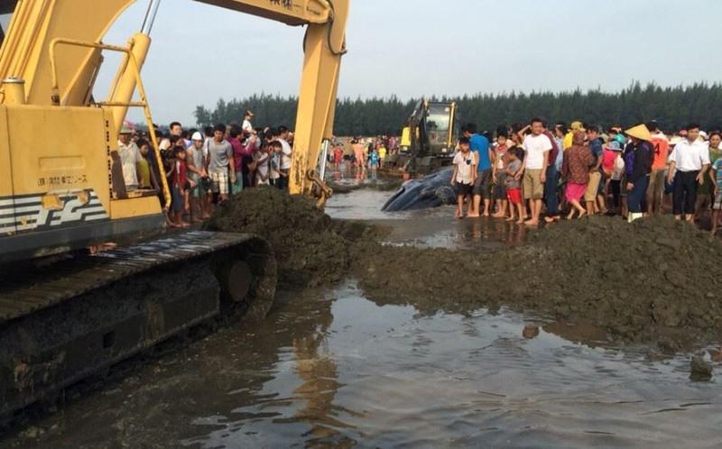 Chùm ảnh: 7 giờ miệt mài giải cứu cá voi 15 tấn  - ảnh 6