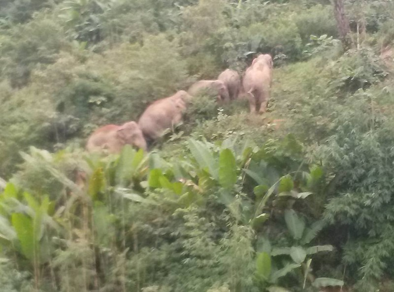 Nửa đêm đốt lửa, đánh trống đuổi voi trở lại rừng - ảnh 2